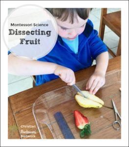 Montessori Science: Dissecting Fruit